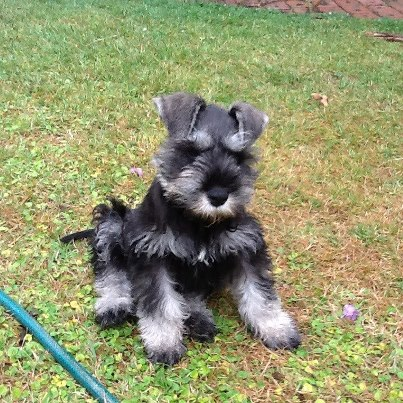 Buddy - 11 weeks