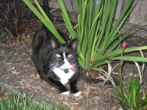 My garden - get out!