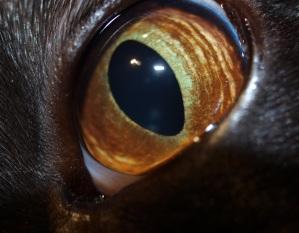 Chenna evileye Devilcat