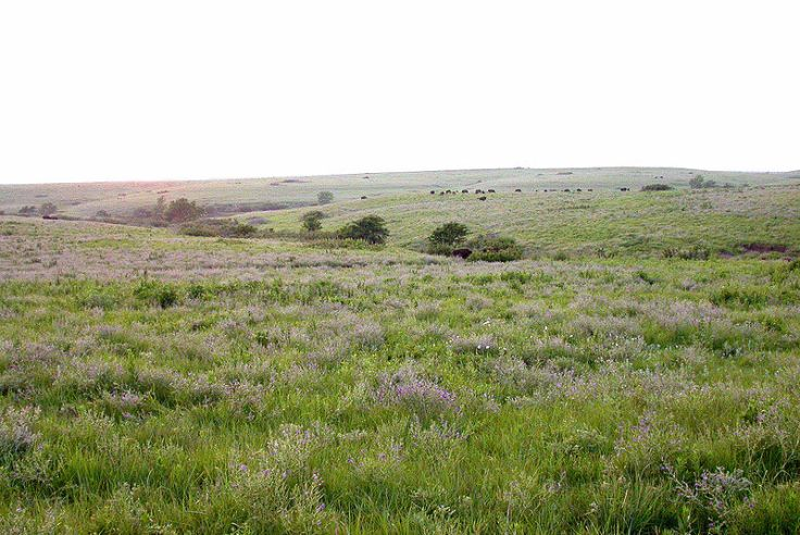 A tallgrass prairie in the Flint Hills, northeastern Kansas.