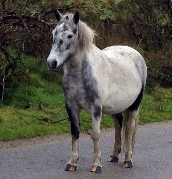 Pony on Bodmin Moor (from my recent trip)
