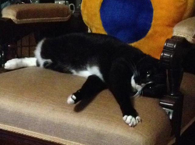 Devilcat-chair2
