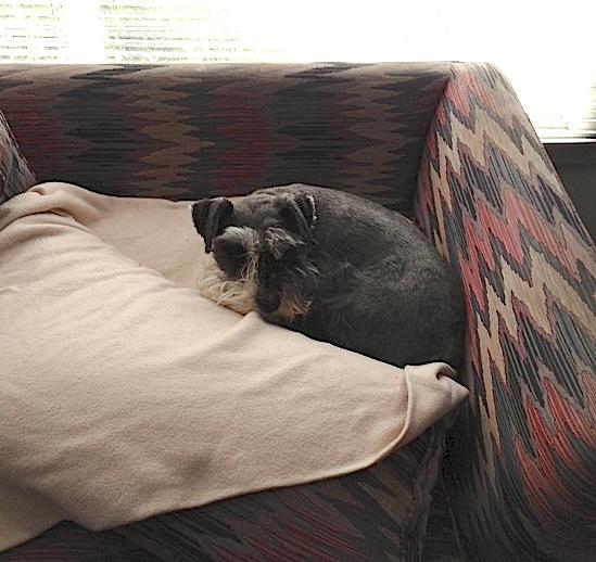 Buddy in devilcat's bed