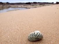 shell#2