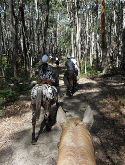 horse - trail