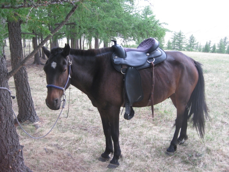 My horse, Sir Placid