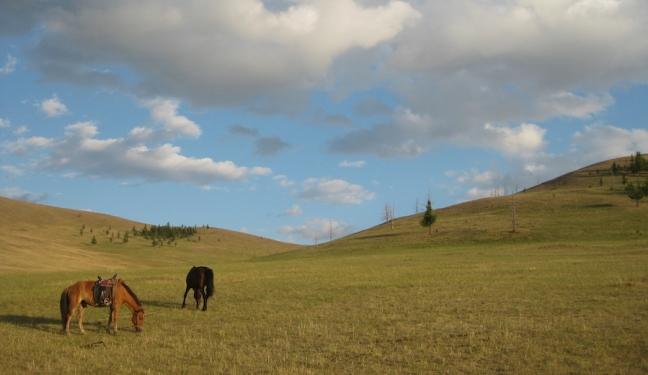 campsite_day 7_horses