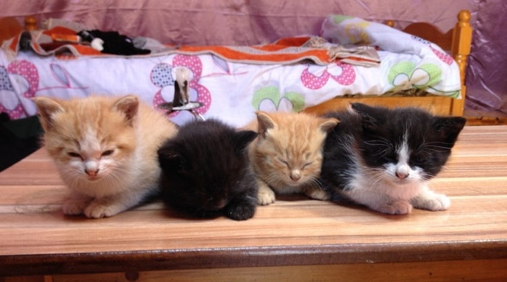 IMG_2717 kittens