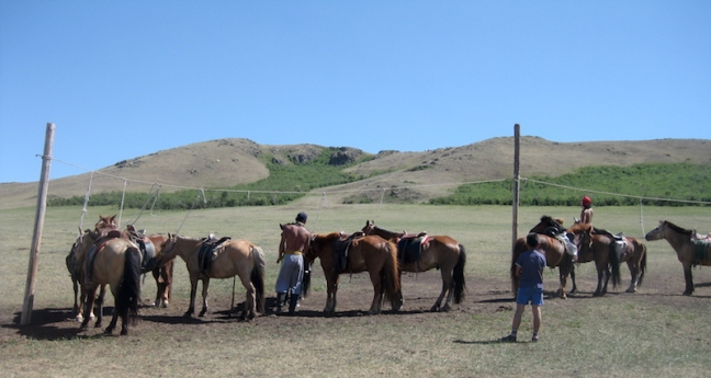 Steppe Riders horses, Mongolia
