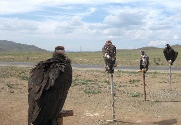 Day 4 - roadside eagles