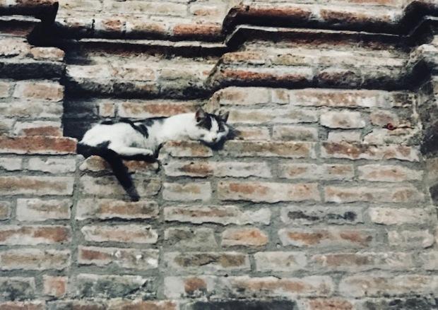 perugia_cat