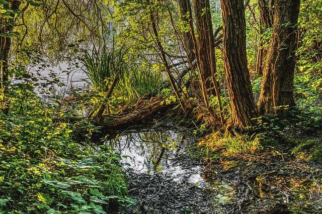 swamp-2440663_640