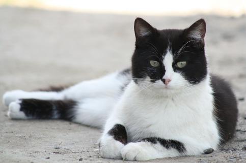 cat-179611_1280