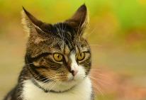 cat-3699158_1280