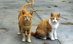 cats-1800942_1280