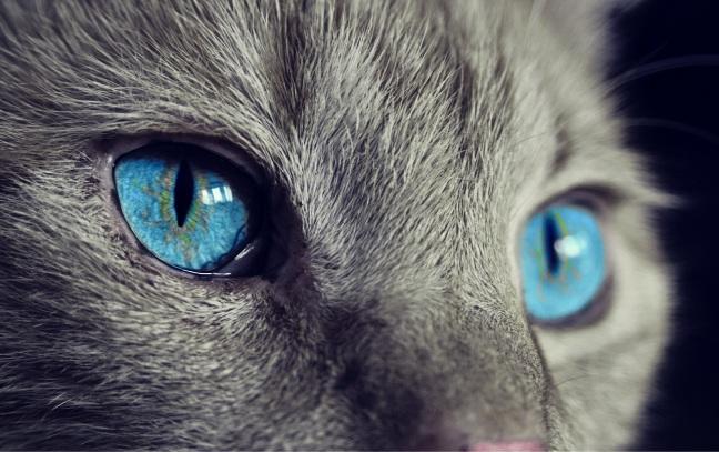 Espa_cat-1285634_1280