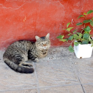 Morocco_rabat_cat1