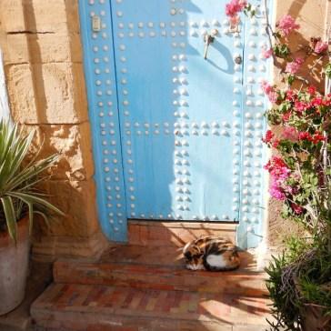 Moroccoa_Rabat_cat2